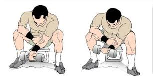 Image result for dumbbell wrist curl