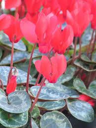 Holiday Plants - Entomology - News - Story