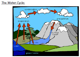 igcse biology   cycles within ecosystemskey ideas   evaporation  condensation  precipitation  amp  transpiration  rather unhelpfully not shown on this diagram