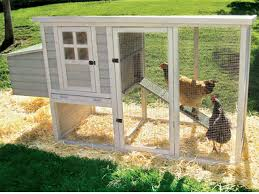 Operating   Small chicken house Plans   Beyond Sarajevo
