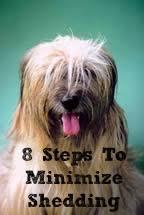 8 Steps To Minimize Shedding In Dogs - Cowboy <b>Magic</b>