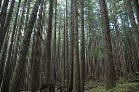 From Tree to <b>Shining</b> Tree | Radiolab | WNYC Studios