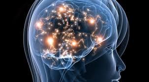 Znalezione obrazy dla zapytania mózg