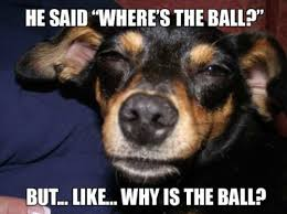 Really-High-Dog-Meme-Wonders-The-Big-Questions-About-The-Ball.jpg via Relatably.com