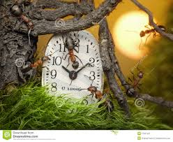 Resultado de imagen para relojes y hormigas