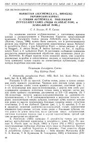 (PDF) LADY'S MANTLES (ALCHEMILLA L., ROSACEAE) OF THE ...