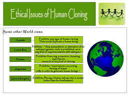 Human Cloning Research Paper   Advanced Writers cathedral raymond carver essay