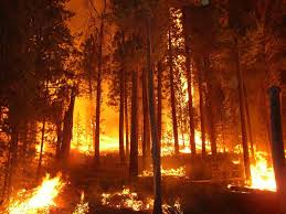 Αποτέλεσμα εικόνας για πυρκαγιες