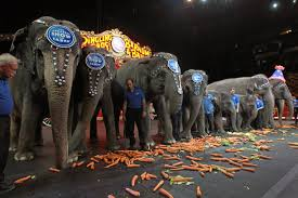 animal cruelty tag newshour why animal rights groups pushed ringling bros to retire elephants