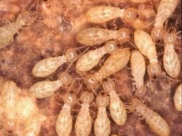 شركة مكافحة حشرات بابها Images?q=tbn:ANd9GcSYWK2XAylq-VaU7opTmqzZC5UEy2SuUUvoxsNDuixUj8w97G_g