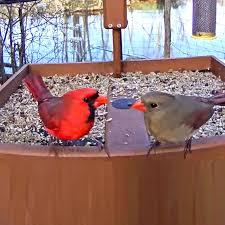Cornell FeederWatch Cam - All About <b>Birds</b>