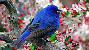 Bluebird of Happiness Day | September 24 | KeepIn Calendar