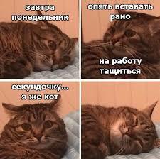 Пин от пользователя Ирина Прохорова на доске HAVE FUN ...