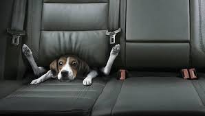 Image result for Safe Car Ride with Dog Car Seats