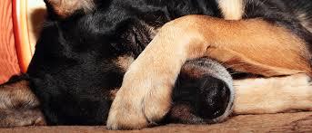 Image result for dog smelling food