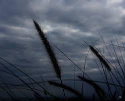 Resultado de imagen para la mañana triste y nublada