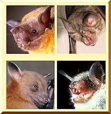 <b>Bats</b> and <b>bat</b> specialists in Russia