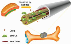 3D <b>Printing</b> of <b>Hot</b> Dog‐Like Biomaterials with Hierarchical ...
