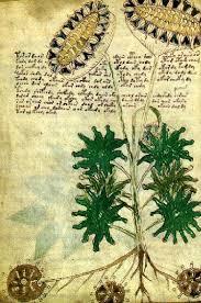 Manuscrisul lui Voynich Images?q=tbn:ANd9GcSZI3LMr1NQfekKmIN0c3Mw6w77QOatnOI3ZUWbVW-KVXb7KQJ8