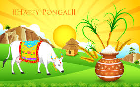 new pongal festival hd pictures pongal 2016 wishes images