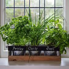 Kitchen Windowsill Herb Garden Indoor Herb Garden Kit By Viridescent Wooden Windowsill
