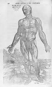 anatomy in the renaissance essay heilbrunn timeline of art de humani corporis fabrica of the structure of the human body