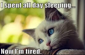 Funny Cats Sleeping on Pinterest | Cat Sleeping, Funny Cats and ... via Relatably.com