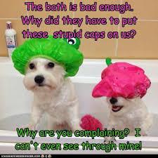 Δεν μας αρέσει το μπάνιο!