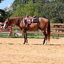 franks farms home facebook image contain horse sky outdoor and nature