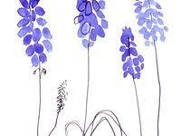 muscari: лучшие изображения (16)   Цветы, Ботанические ...