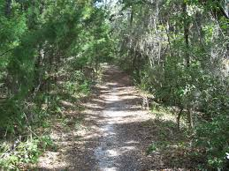 Image result for images of shell mound cedar key