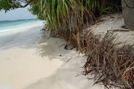 beach erosion a vulnerable scenario in the ecocare 26 geographical atolls over 1190 islands is situated in the in n ocean at the heart of the equator these islands famous for its