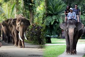 Hasil gambar untuk elephant ride bali