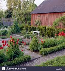 patio shrubs red tulips in formal paved patio with clipped shrubs and low box hedge