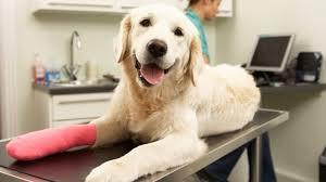 <b>Pet</b> insurance: <b>cat</b>, horse and <b>dog</b> insurance - MSE