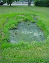 Image result for failed septic drain field