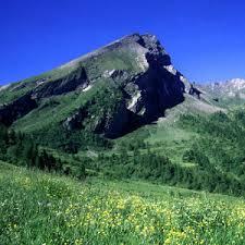 Ente di Gestione dei Parchi delle Alpi Cozie | Le praterie