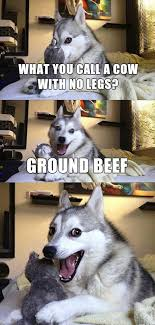 15 Pun Husky Meme Jokes are Insanely Cute - Dose of Funny via Relatably.com