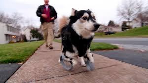 Injured <b>Animals</b> Get Second Chance With 3-D <b>Printed</b> Limbs