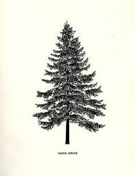 spruce tattoo artists - Google Search | Evergreen tree tattoo, Tree ...