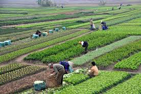 Agricultulture ; Farming