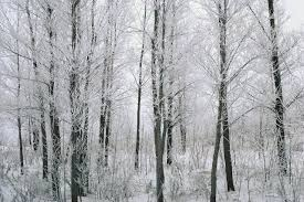 analysis of stopping by the woods on a snowy evening by robert dust of snow analysis by robert frost