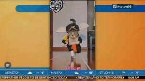 BT Bright Spot: This <b>Fashion Cat</b> Knows How To Rock the Catwalk