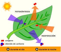 Resultado de imagen de La luz solar y la fotosíntesis