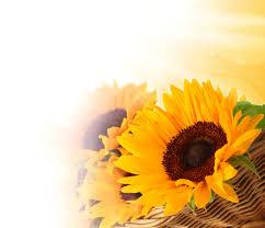 """""""阳光""""的图片搜索结果"""