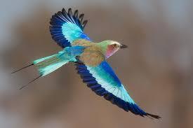Risultati immagini per uccelli in volo