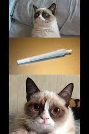 Hopp, ezt lenyúltuk on Pinterest | Grumpy Cat, Pregnancy Videos ... via Relatably.com