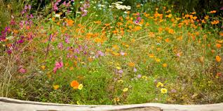 Small Picture How to create a wildflower meadow in your garden Eden Project