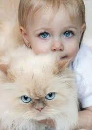 """Résultat de recherche d'images pour """"animaux avec des yeux bleu"""""""