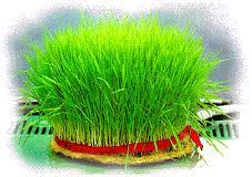 Image result for سبزه ی عید